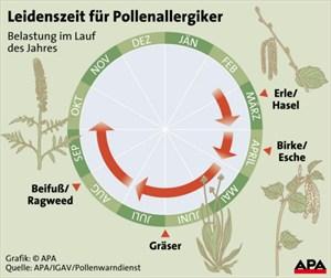 Die Leidenszeit der Allergiker