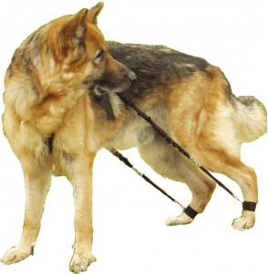 Der biko Hundeexpander verschafft Hunden wieder Freude an der Bewegung